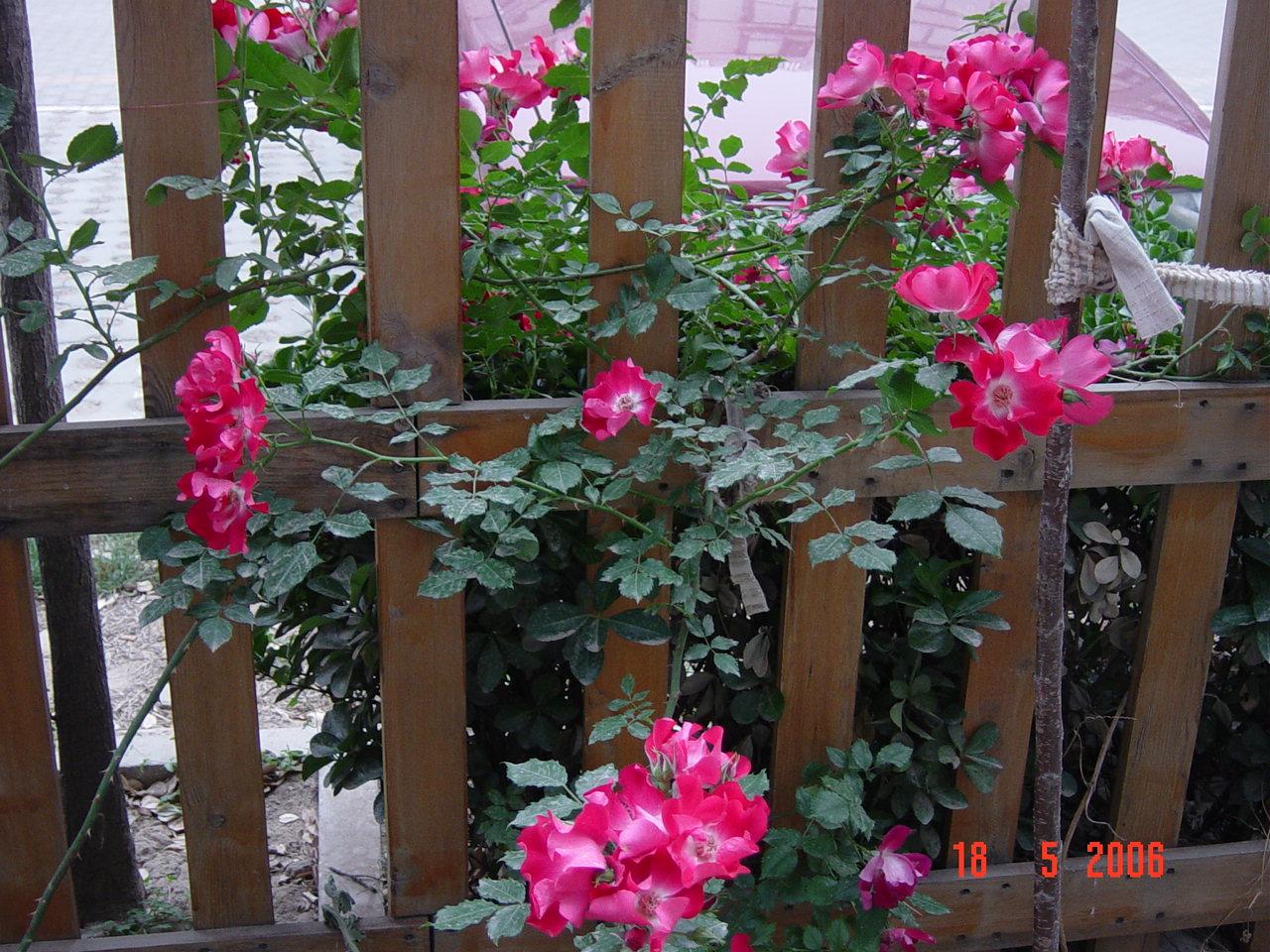 以前没种过花,听说在淘宝里买花种子很多都是