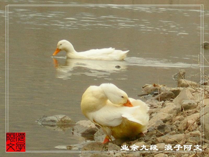 北京 独孤/●独孤狼de微博:《关注脚下/五百年》●狼之队de微群:《狼行...