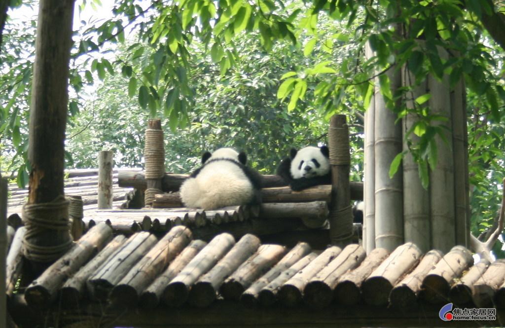 闲篇少扯,俺们一行到达熊猫别墅也就十点多钟,基地里面茂林高清图片
